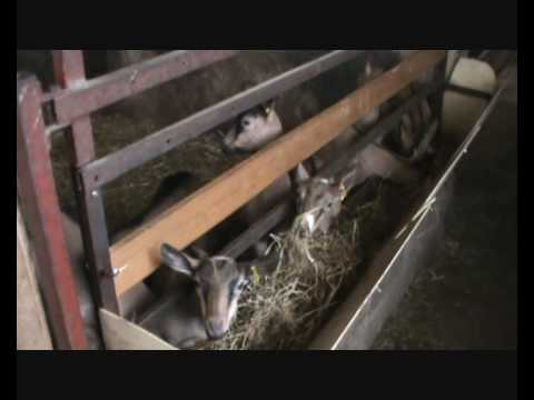 Goats Shed in the Loire