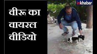 विरेंद्र सेहवाग का कुत्तों के लिए प्यार || Virender Sehwag's love for Dogs - ITVNEWSINDIA