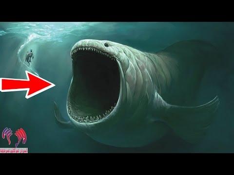 هل تعلم ان الحوت الذى ابتلع سيدنا يونس