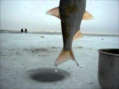 рыбалка на цимлянском 2016