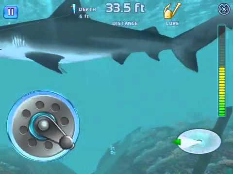 играть в ловим акулу