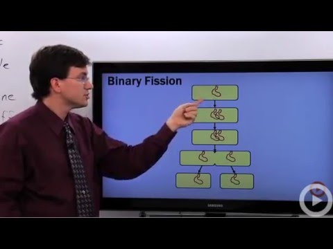 Binary Fission -hOyUcjqcGpQ