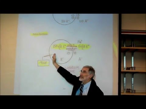 PHYSIOLOGY; THE CELL MEMBRANE POTENTIAL & THE ROLE OF POTASSIUM; PART 1 by Professor Fink