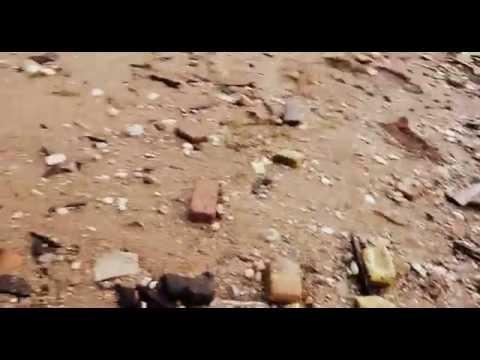 Happy Kitten Video