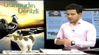 Kitten Interrupts TV Broadcast - ABCNEWS
