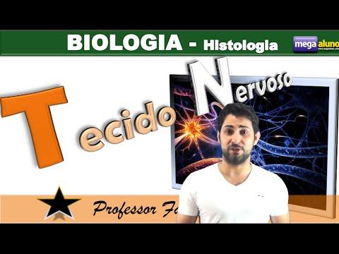 Tecido nervoso (parte 1 de 2)