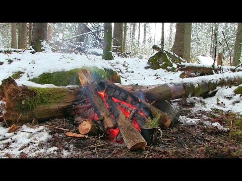 5 Minutes for your Soul. Meditation. Camp Fire in the Forest. Nature Sound and Relaxing Music.