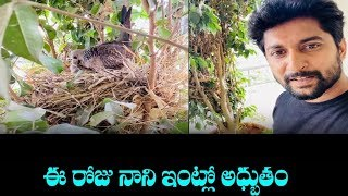 Natural Star Nani Shares Natural Beauty Video His Balcony | Nani Posted A Birds Video - RAJSHRITELUGU