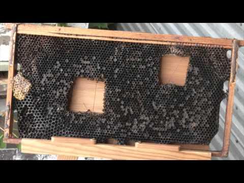Healthy Beekeeping Tips