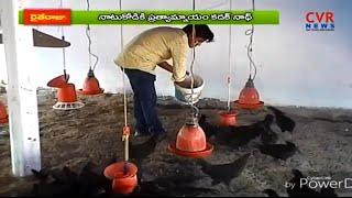 కడక్ నాథ్ కోళ్ల పెంపకం | Special Story on Kadaknath chicken farming | Jagityal Raithe Raju | CVR - CVRNEWSOFFICIAL