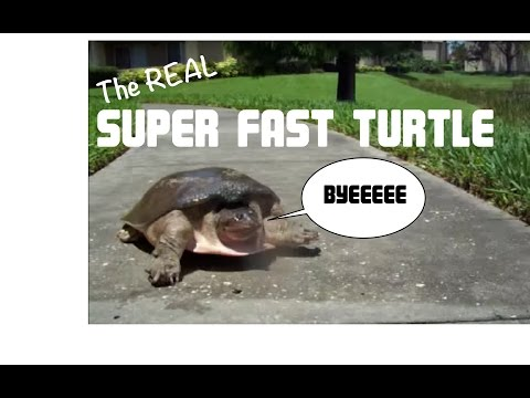 A fast turtle