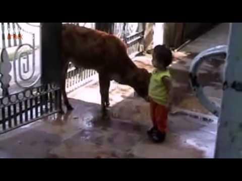 Animales atacando a niños