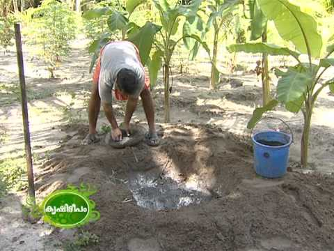 Success story of a traditional farmer Narayanapillai