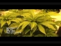 Medical Marijuana Grow 1