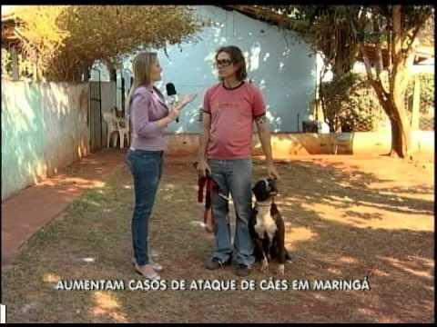 COMO AGIR EM CASOS DE ATAQUES DE CÃES   BALANÇO GERAL 05 09 12