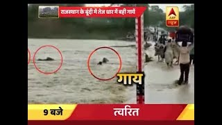 Rajasthan: 5 cows get drown in water, no body comes out to rescue in Bundi - ABPNEWSTV