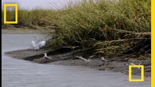 魚を捕まえるのが面倒なイルカたち。鳥の魚を横取り。