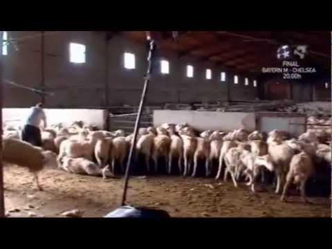 Comedero ovejas