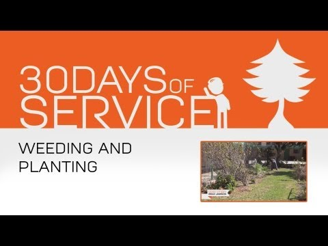 30 Days of Service by Brad Jamison: Day 14 - Weeding and Planting