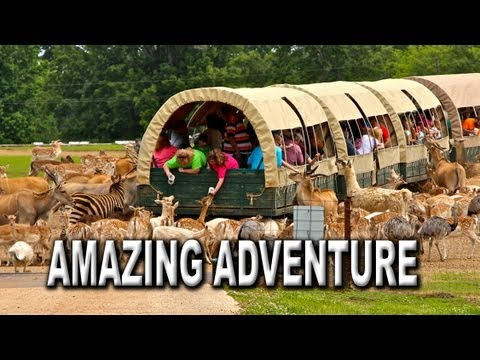 An Amazing Adventure Awaits at the Global Wildlife Center in Louisiana