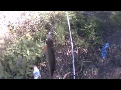 рыбалка в станице трехостровской
