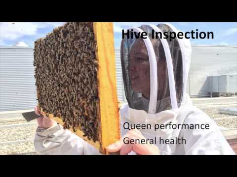 Beginner Beekeeping: What You Should Be Doing in March and April