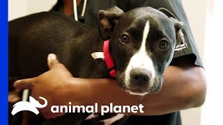 A Dog's Fight For Life - ANIMALPLANETTV