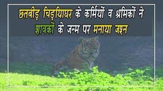 video : सफेद बाघिन और उसके 3 शावक मोहाली में सार्वजनिक प्रदर्शन के लिए तैयार