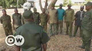 Saving Nigeria's last lions   DW English - DEUTSCHEWELLEENGLISH