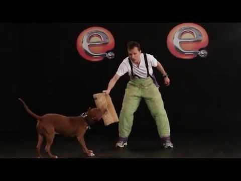 Alexandre Rossi explica como evitar e combater o ataque de um cão