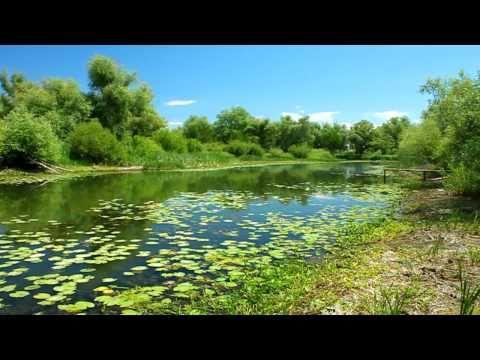 Природа Саратова 2010