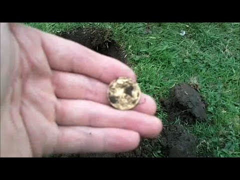 Metal detecting (UK) #19 gold & hammered silver