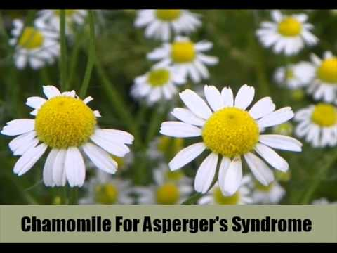 6 Best Herbal Remedies For Asperger's Syndrome