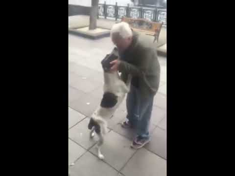El conmovedor reencuentro de un perro y su amo