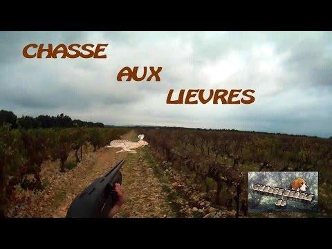 Chasse Beagle: Saison 2013/2014: chasse aux lievre
