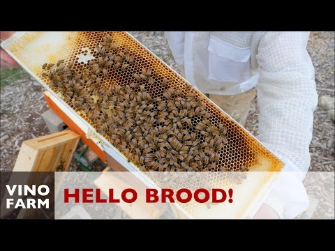 Brood, Larvae and Pollen ... Oh My!