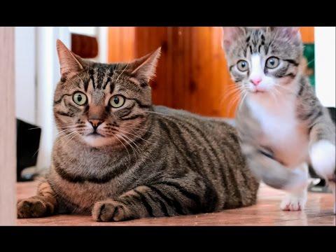 Śmieszne Koty Kompilacja - Funny Cats Compilation