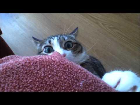 Bardzo straszny kot