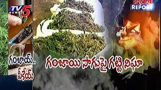 Special Report On Cannabis Mafia In Telugu States | Drug Mafia | TV5 News - TV5NEWSCHANNEL