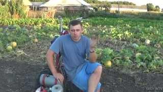 Работа бороной. Уборка после выкопки картофеля. Сеем рожь...