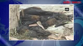 video : हिमाचल में अचानक मरे कई चमगादड़, निपाह वायरस का खौफ