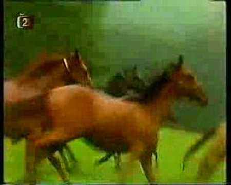 Když se zamiluje kůň