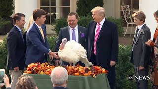 President Donald Trump pardons 2017 Thanksgiving turkeys in traditional ceremony - ABCNEWS