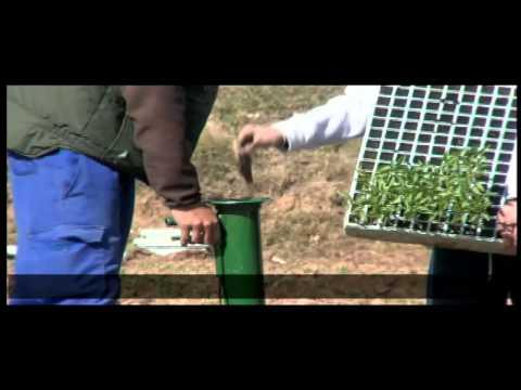 Plantador de Hortalizas