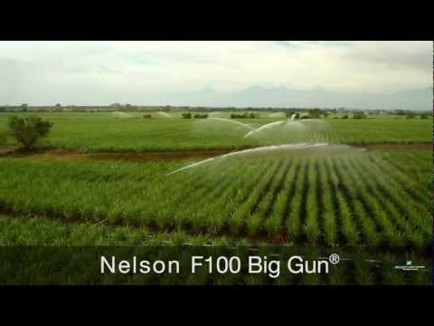 Irrigating Sugarcane with Nelson Irrigation Sprinklers