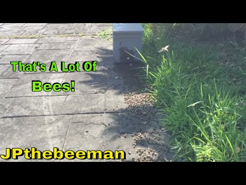Watch Thousands Of Bees March Into My Hive Box!
