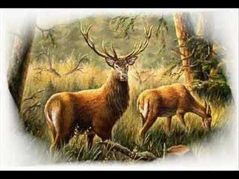 Poľovnícke signály Slávnostné Lesnice