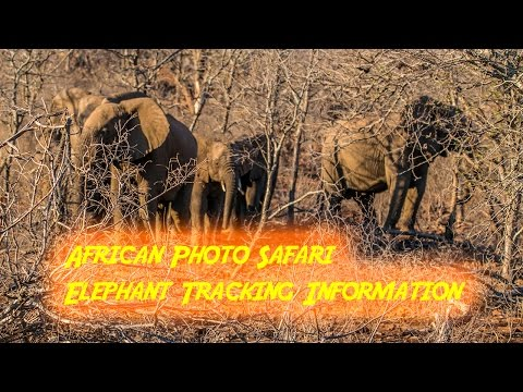 Africa Photo Safari Elephant Tracking Information