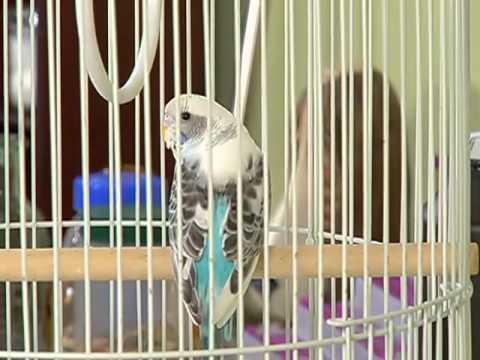 MiMascota | Aves exóticas