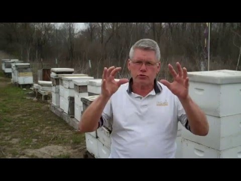 Beekeeping Spring Management Crucial